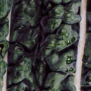 abstract kale close up