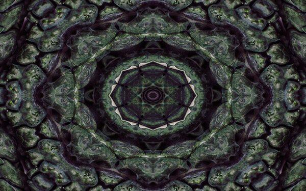 abstract kaleidoscopic kale