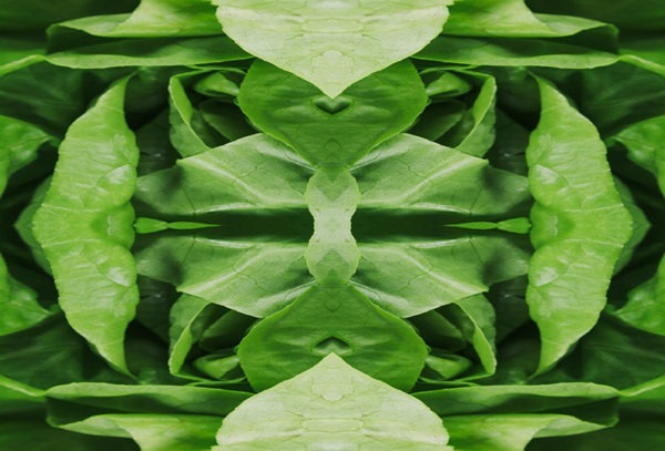 leafy greens kaleido