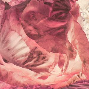 Pink Lettuce